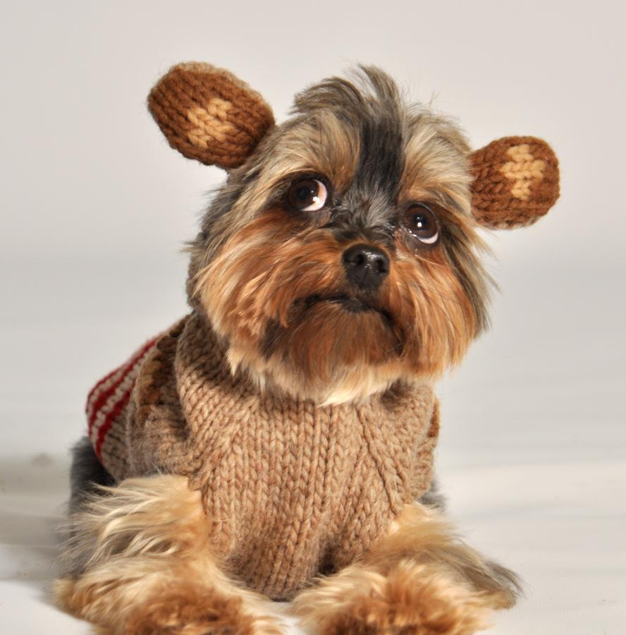 Monkey Hoodie Dog Sweater Chilly Dog Sweaters