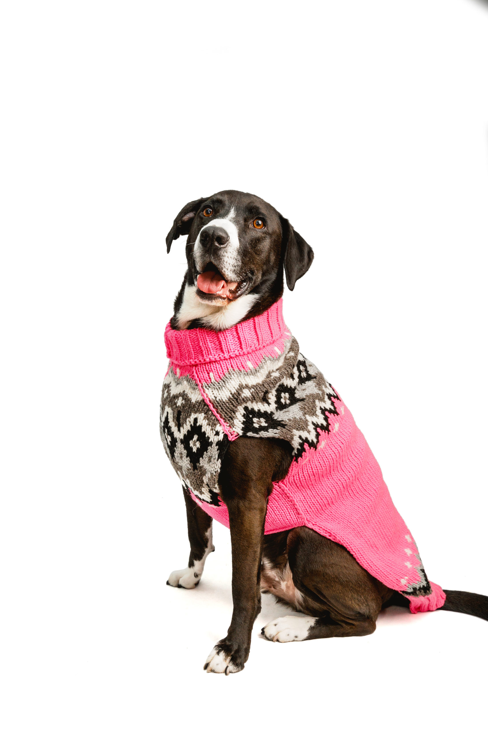 XX-Small Chilly Dog Purple Woodstock Dog Sweater